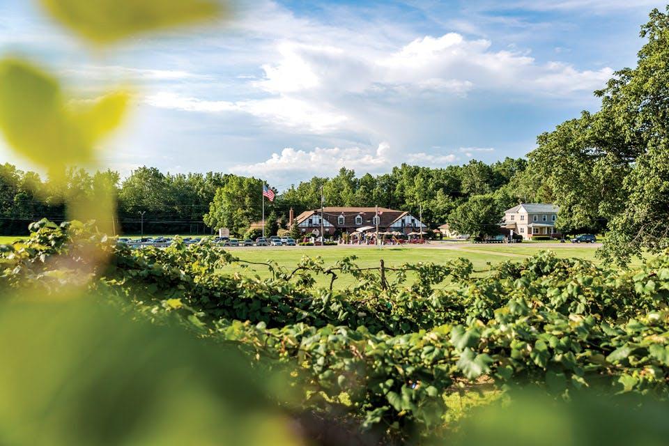 Valley-Vineyards