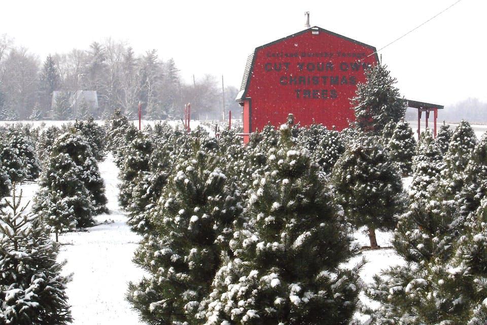 Ohio Winter Fun: Christmas Tree Farms